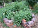 Keyhole Garden Grows!